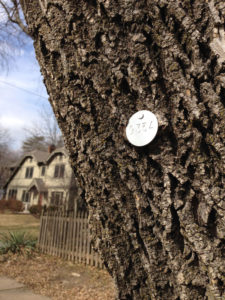 ash tree in foreground with metal tag affixed to trunk